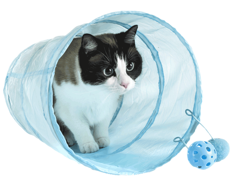 cat in tunnel toy