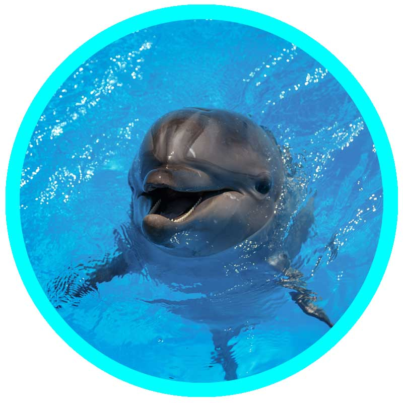 Dolphin Waters Healing-dolphin messages